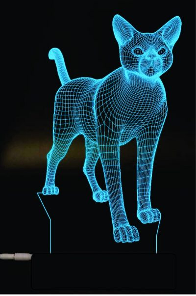 מעמד מואר חתול